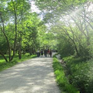 Bosque Lozoya