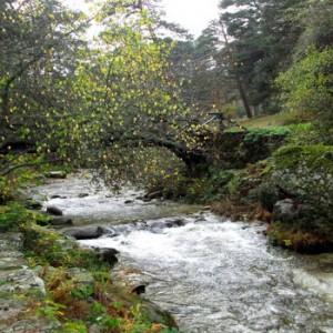 Bosques Valsaín