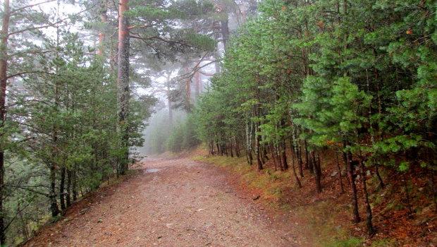 Camino Schmidt