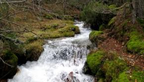 Arroyo de la Angostura