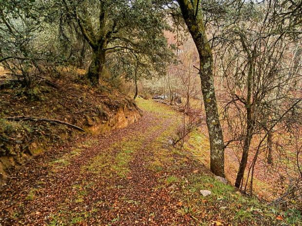 Camino Monasterio Bonaval