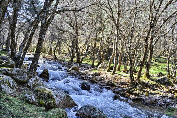 Arroyo del Aguilón