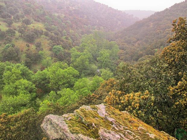 Bosques San Agustín del Guadalix