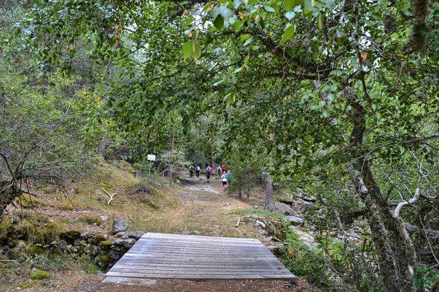 Puente de los Hoyones
