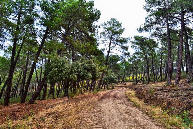 Pinar de Casasola