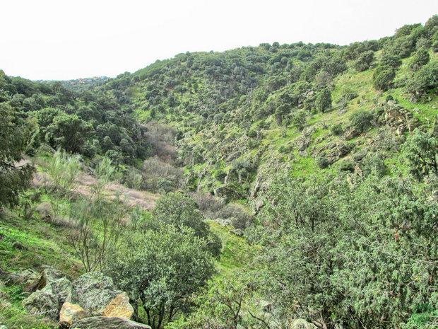 Cerro Peral Valdemorillo