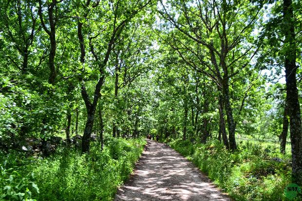 Bosque de San Mamés